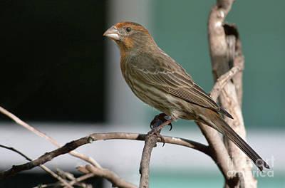 Bird On Branch Original