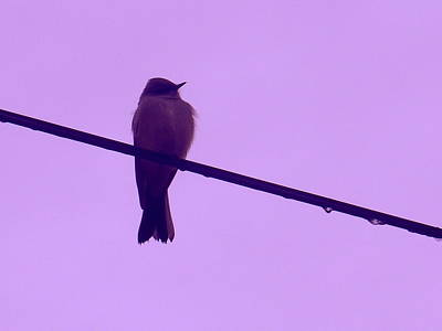 Photograph - Bird On Frozen Wire by Marlene Rose Besso