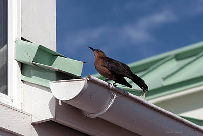 Photograph - Bird On Gutter by Kay Lovingood