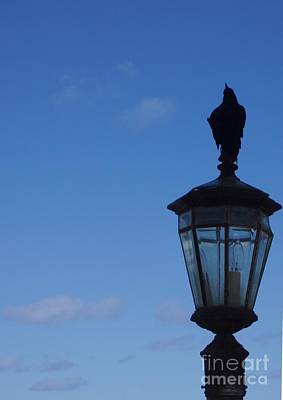 Photograph - Bird On Lamplight by Deborah  Crew-Johnson