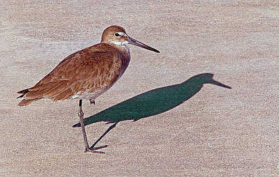 Photograph - Bird On One Leg Admiring His Shadow  by Bob Slitzan