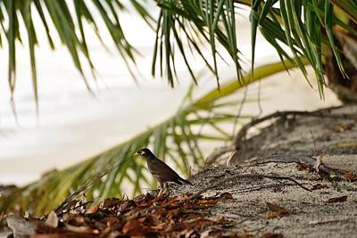 Common Myna Photograph - Bird On The Beach by Michael Scott