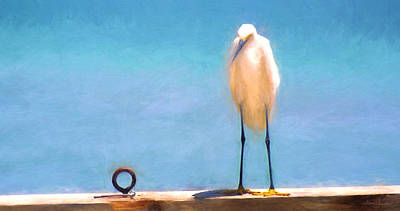 Photograph - Bird On The Rail by Glenn Gemmell