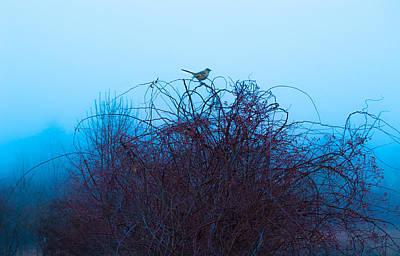 Bird On The Vine Print by Sabrina Ramina