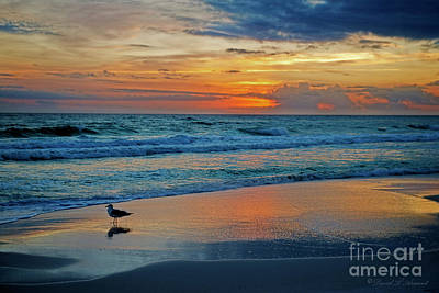 Photograph - Bird On The Wet Sand At Sundown by David Arment