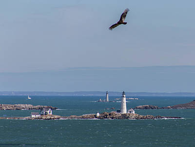 Photograph - Bird Over Boston And Graves Lighthouses by Brian MacLean