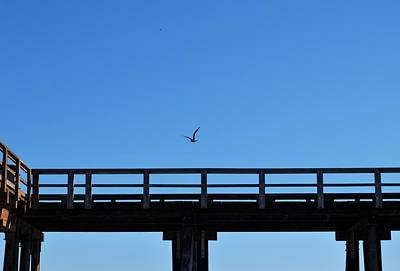 Photograph - Bird Over Pier by Matt Harang