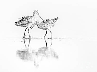 Photograph - Bird Pair  by Sonya Lang