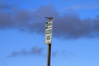 Photograph - Bird Parking Violation by Bonnie Follett