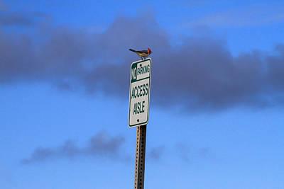 Photograph - Bird Parking Violation by Bonnie Follett