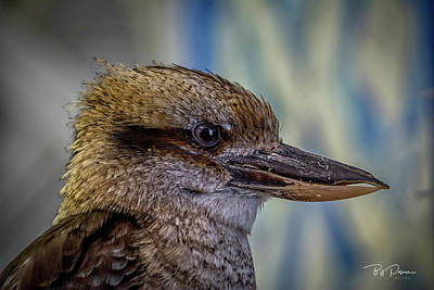 Photograph - Bird Portrait by Bill Posner
