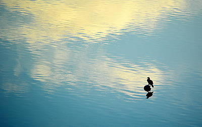 Photograph - Bird Reflection by AJ Schibig