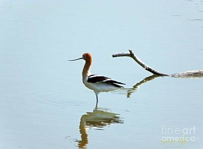 Photograph - Bird Reflection by George Tuffy