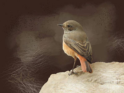 Painting - Bird - Robin by Shirley Stalter