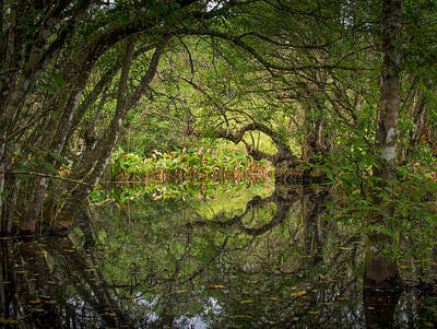 Photograph - Bird Rookery Swamp by Bill Martin
