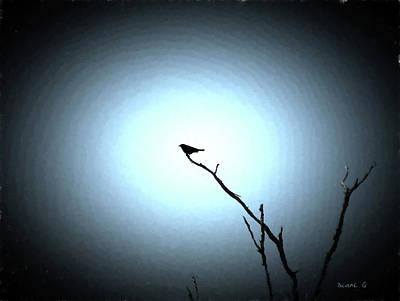 Photograph - Bird Silhouette by Diane Giurco