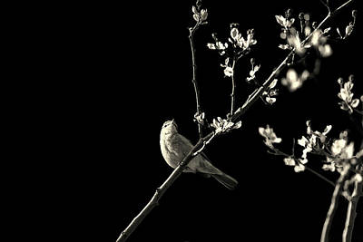 Cute Cartoon Photograph - Bird Silhouette by Martin Newman