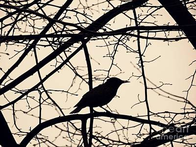 Photograph - Bird Silhouette by Sarah Loft