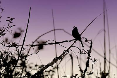 Photograph - Bird Sings by Angie Tirado