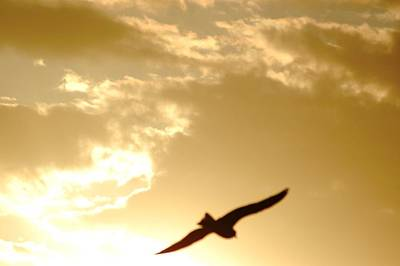 Photograph - Bird Soaring To Heavens by Matt Harang