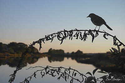 Montage Photograph - Bird Song At Last Light by Dave Gordon