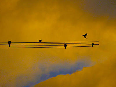 Bird Song Art Print by Mark Blauhoefer