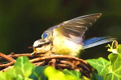 Photograph - Bird Songs by Georgiana Romanovna