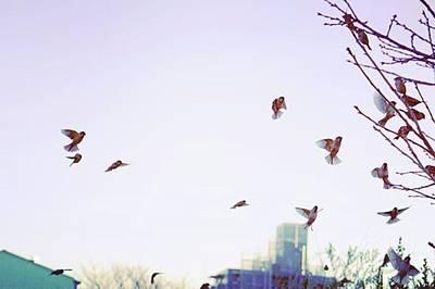Warwickshire Wall Art - Photograph - #bird #sparrow  #nature #park by Yoshitaka Hayashi
