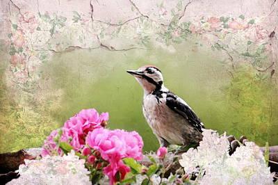 Feeding Mixed Media - Bird Stilllife by Heike Hultsch