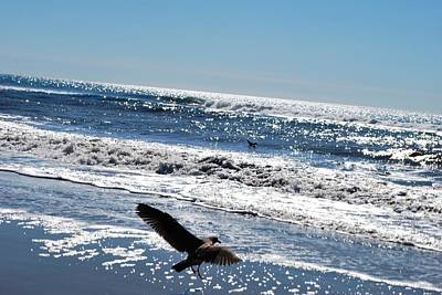 Photograph - Bird Takes Off Over The Pacific by Matt Harang