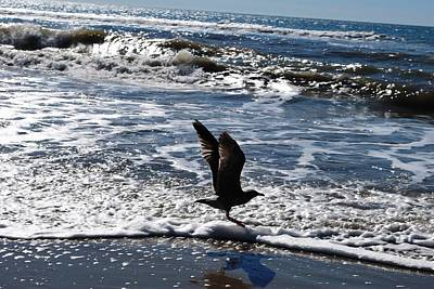 Photograph - Bird Taking Flight On The Shore by Matt Harang