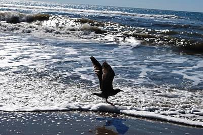Photograph - Bird Taking Flight On The Shore by Matt Harang
