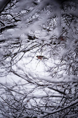Photograph - Bird Through The Branches by Frederico Borges