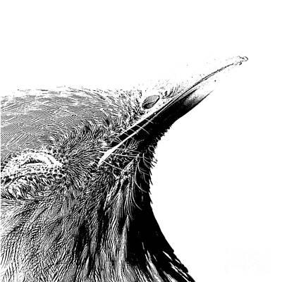 Birds Drawings - Bird Transparent Background by Edward Fielding
