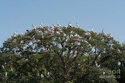 Photograph - Tree Of Bird Life by Paul Rebmann
