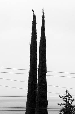 Photograph - Bird Treetops Wires by Colleen Williams