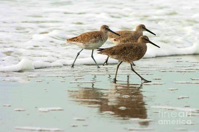 Beach Theme Decorating Photograph - Trio Plover Series by Angela Rath