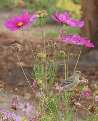 Photograph - Bird Under Flowers by Wendy Carrington