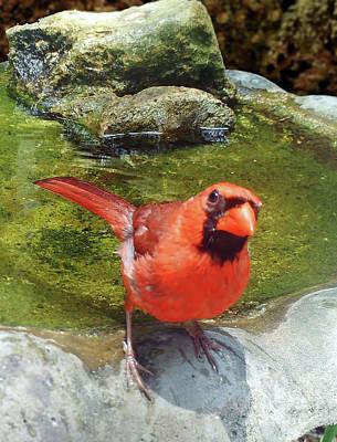 Photograph - Bird Watching by D Hackett