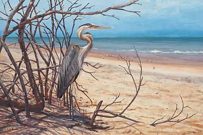 Bird Watching, Gray Heron On Cape Canavaral Seashore, Fl Original