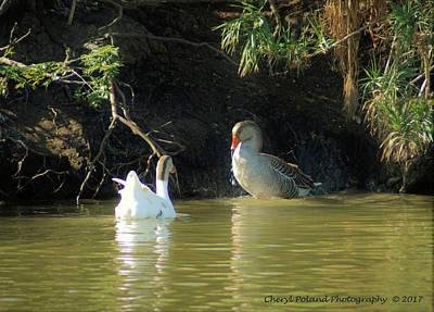 Photograph - Bird Watching In Leander by Cheryl Poland