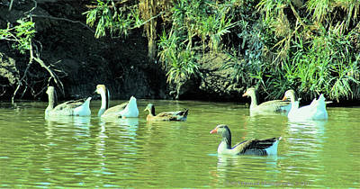 Photograph - Bird Watching In Leander Tx Pic 2 by Cheryl Poland