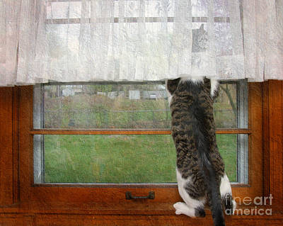 Photograph - Bird Watching Kitty Cat by Andee Design