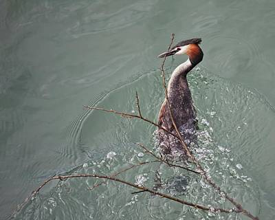 Photograph - Bird Water by Tatiana Travelways