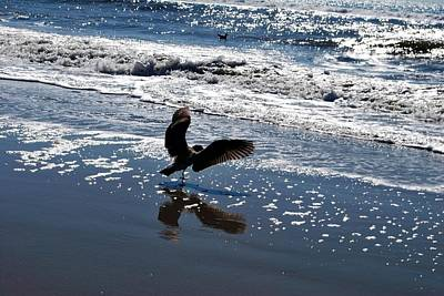 Photograph - Bird Wings Out - Beach Reflection by Matt Harang