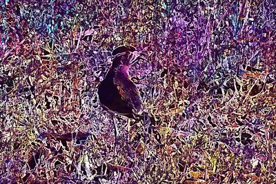 Lapwing Digital Art - Bird Yellow Wattled Lapwing  by PixBreak Art