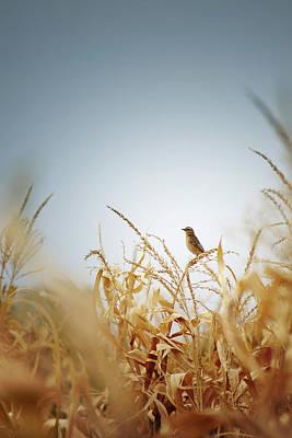 Corn Wall Art - Photograph - Bird by Zoltan Toth