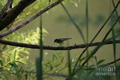 Photograph - Bird02 by Isusko Goldaraz