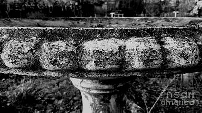 Frank J Casella Royalty-Free and Rights-Managed Images - Birdbath in Black and White  by Frank J Casella
