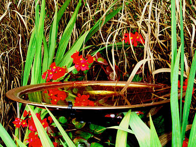 Photograph - Birdbath Reflections by Allen Nice-Webb